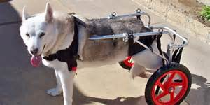 Chairs World Market Dog Wheelchairs Worlds Best Dog Wheelchairs