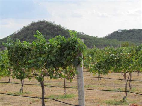 Pilot Knob Vineyard by Attractions In Lasas Tour