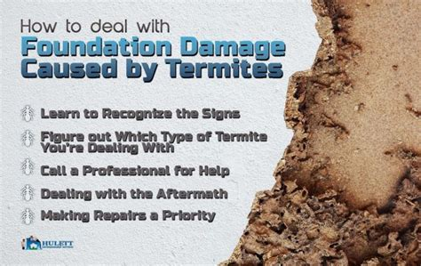 8 Ways To Deal With Pests by 86 Best Images About Termites On Ants Heavy