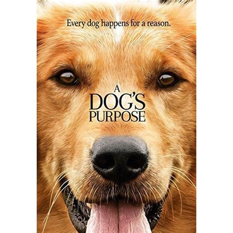 the dogs purpose a s purpose dvd target