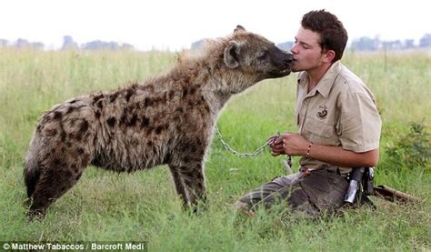 hyena puppies shandor larenty boy who has made friends with a hyena daily mail