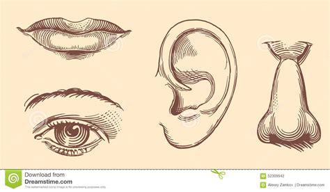 imagenes de ojos y oidos labios ojos o 237 dos nariz cara a mano de las mujeres de
