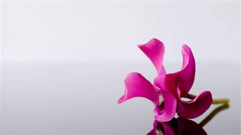 wallpaper bunga anggrek ungu tips tips kesehatan untuk anda 30 wallpaper bunga paling