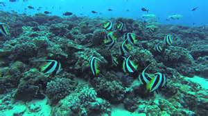 Edible Reef Fish Of Hawaii Edible Reef Fish Of Hawaii http://www