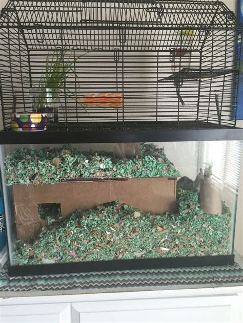 gerbil cage layout gerbil cages gerbil hamster cages
