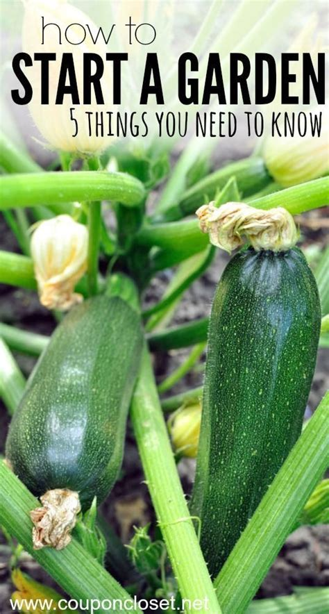 how to start a vegetable and fruit garden 17 best ideas about apartment vegetable garden on