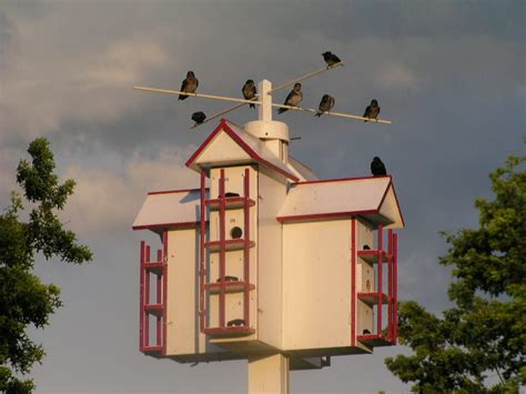 purple martin house lucky 7