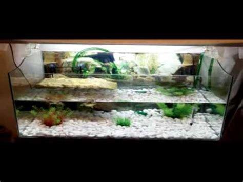 lada per tartarughe d acqua acquario tartarughe