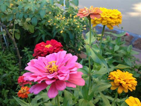 Imagenes Flores De Jardin | image gallery jardin de flores