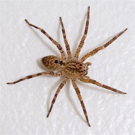 House Spider Seattle by Spider In Seattle Washington