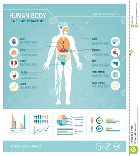 human body infographics stock vector image of infographic 58810715