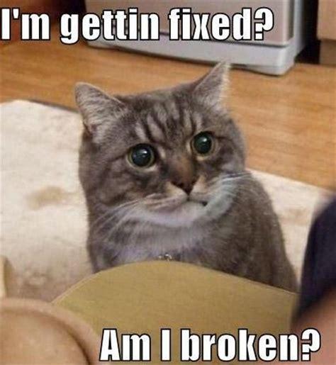Cute Funny Cat Memes - 30 funny animal captions 30 pics amazing creatures