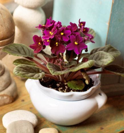 top flowering houseplants midwest living