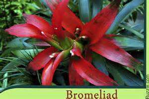 tropical forest plants these vibrant rainforest plants will take your