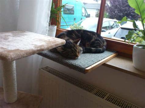 wohnung katzengerecht gestalten - Wohnung Katzengerecht