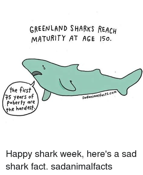 Sad Shark Meme - 25 best memes about sharking sharking memes