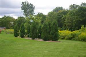 tips on landscaping with trees