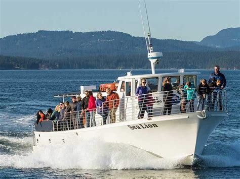 boat tours from seattle to san juan islands san juan islands whale watching from seattle kayaking