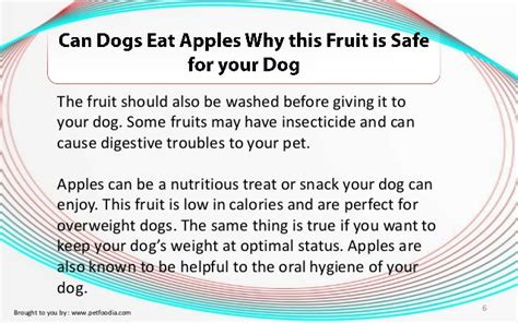 can dogs eat apple skin can dogs eat apples why this fruit is safe for your