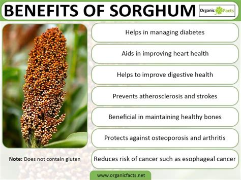 Benefits Of Mba In Healthcare by Sorghum Farming And Processing Business Plan In Nigeria