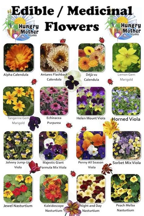 List Of Garden Flowers Floralfact Did You There Are 40 Types Of Flowers That Are Edible You Must Be