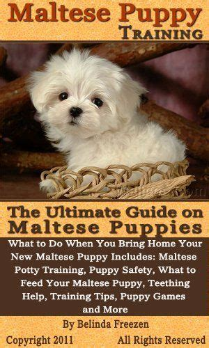 maltese puppy names 142 best images about maltese on