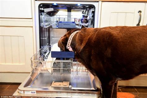 puppy eats everything spends more than 37k on a proof kitchen after pup eats everything in sight