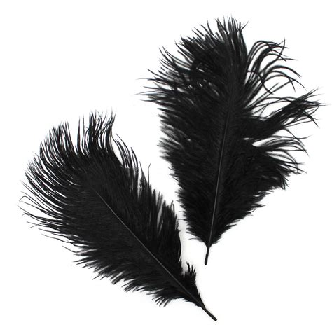 Small Black Feather Hobbycraft Small Ostrich Feathers In Black X 2 Hobbycraft
