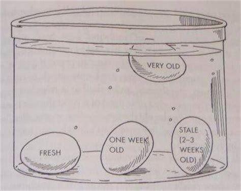 The Egg Test Float Or Sink egg float test