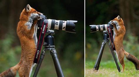 wild photographers  curious animals  cameras page    volganga