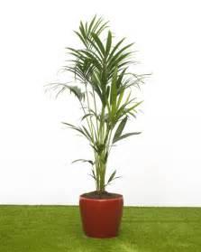 indoor plants uk health benefits of house plants house of plants