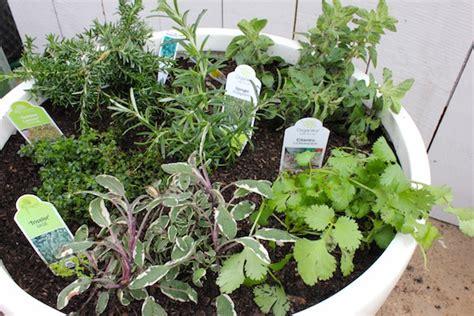 edible container garden create an edible container garden with diy home