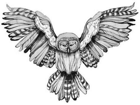 owl tattoo line drawing owl line drawing barn owl pinterest