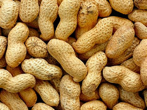peanuts pictures hypersensitivity reactions to corticosteroids