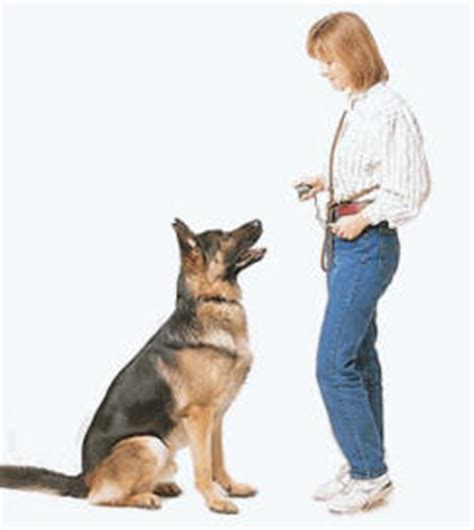 how to teach a puppy to sit how to teach your sit come and more