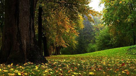 imagenes 3d bosques bosque oto 241 al 1920x1080 fondos de pantalla y wallpapers