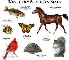 state animals of kentucky line art and full color