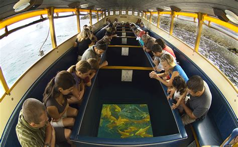 catalina island glass bottom boat tour visit catalina island - Catalina Island Boat Tour