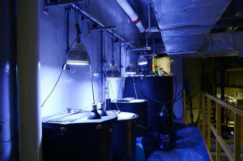 beleuchtung aquarium aquarium led lighting fotos orphek