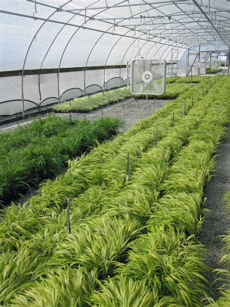high heat plants 100 high heat plants heat tolerant ground cover