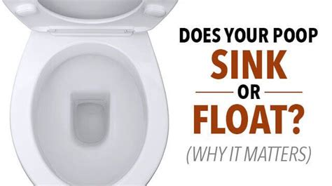 stay in the toilet meaning does your poop sink or float why it matters