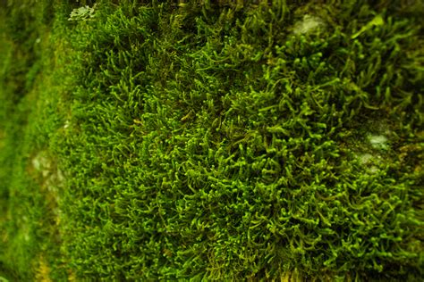 mossy green free stock photo of closeup green moss
