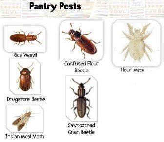 Insects In Kitchen Cupboards - kitchen pantry bugs pest costa blanca spain by