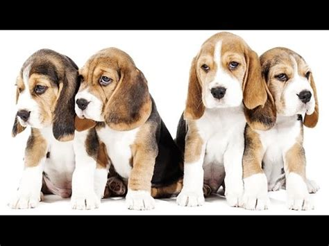 cagnolini da appartamento cani di taglia piccola da appartamento