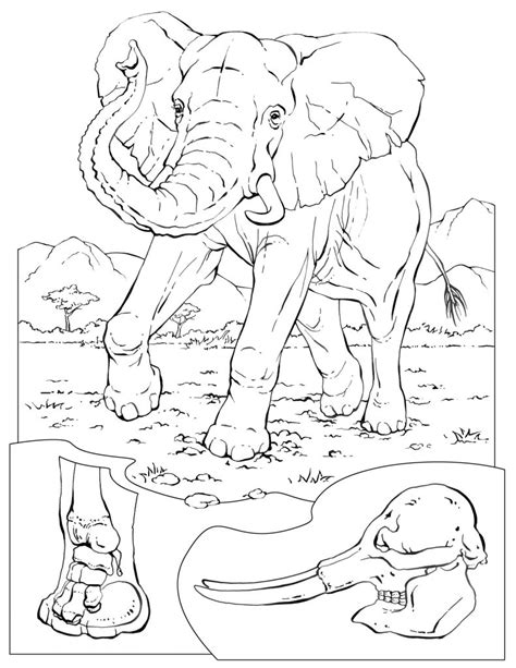 Galerry coloring pages for elephants