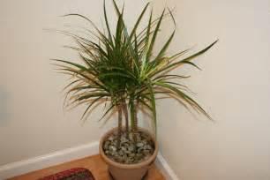 palm tree home decor palm tree home decor art ideas