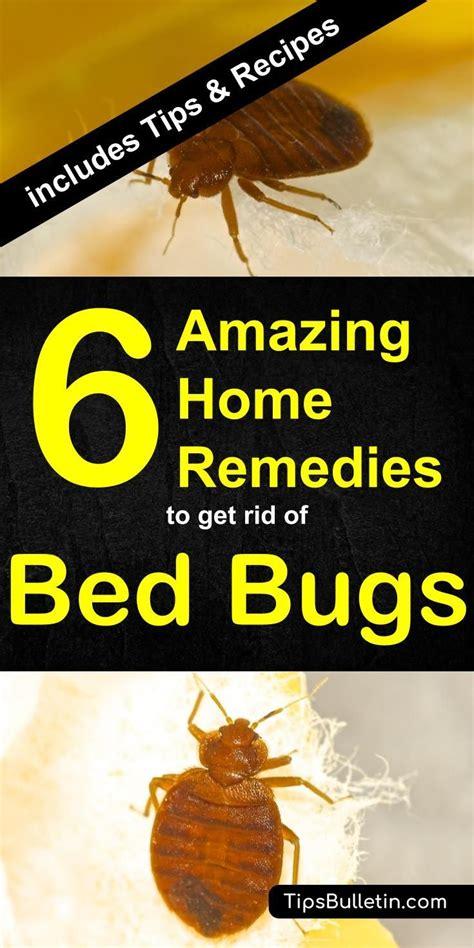bed bugs treatment ideas  pinterest bed bug control   kill bedbugs  cc