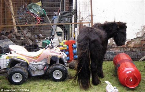 Who Was And Kept In Backyard by Cruel Bought Their Children A Pony And Kept It In