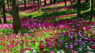 Flowers Garden Pictures Awesome Flower Garden Weneedfun