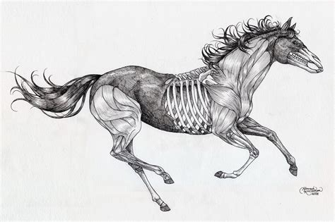 horse skeleton tattoo designs anatomical by paintinggael on deviantart